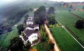 重庆采茶地点 重庆周边采茶的地方有哪些