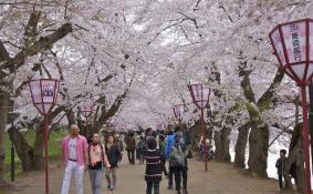 2018杭州双浦樱花节攻略(门票+自驾游路线)