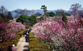 2018年武汉有哪些看梅花的好地方 武汉赏梅攻略