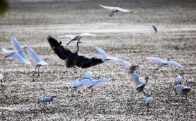 2018年广州南沙湿地公园门票价格多少